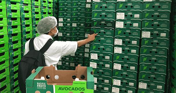 Nesletter 32 – MANAGRO adquiere la totalidad de las operaciones de Pacific Fruits, Invest Pacific