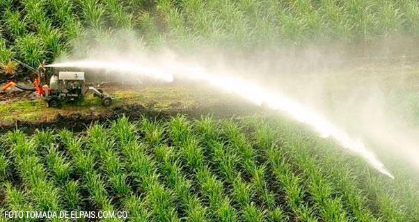 """El Valle tiene un nuevo título: """"campeón"""" en bioenergía, Invest Pacific"""