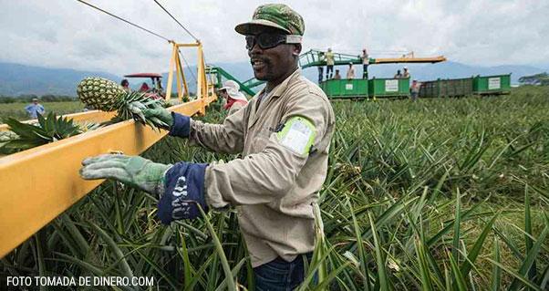 Esta es la revolución del Valle por la diversificación de cultivos, Invest Pacific