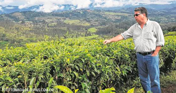 El exclusivo té con el que el Valle conquista paladares en Europa, Invest Pacific