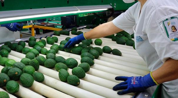 Managro cumple su primer año de inversión en el Valle del Cauca abriendo mercados y fortaleciendo el agro