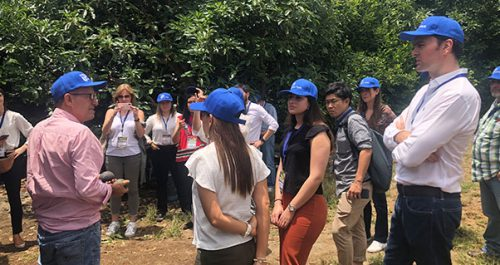 El aguacate hass del Valle del Cauca sigue atrayendo el interés de los jugadores mundiales, Invest Pacific